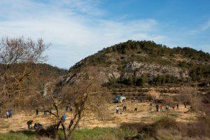 Plantación de árboles en El Grado
